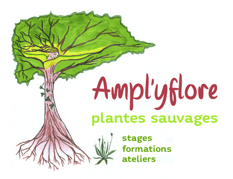 Ampl'yflore plantes sauvages